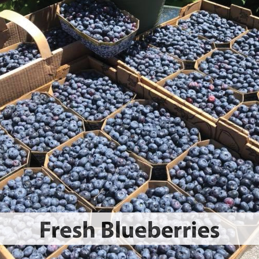 Barkway Farms Blueberries