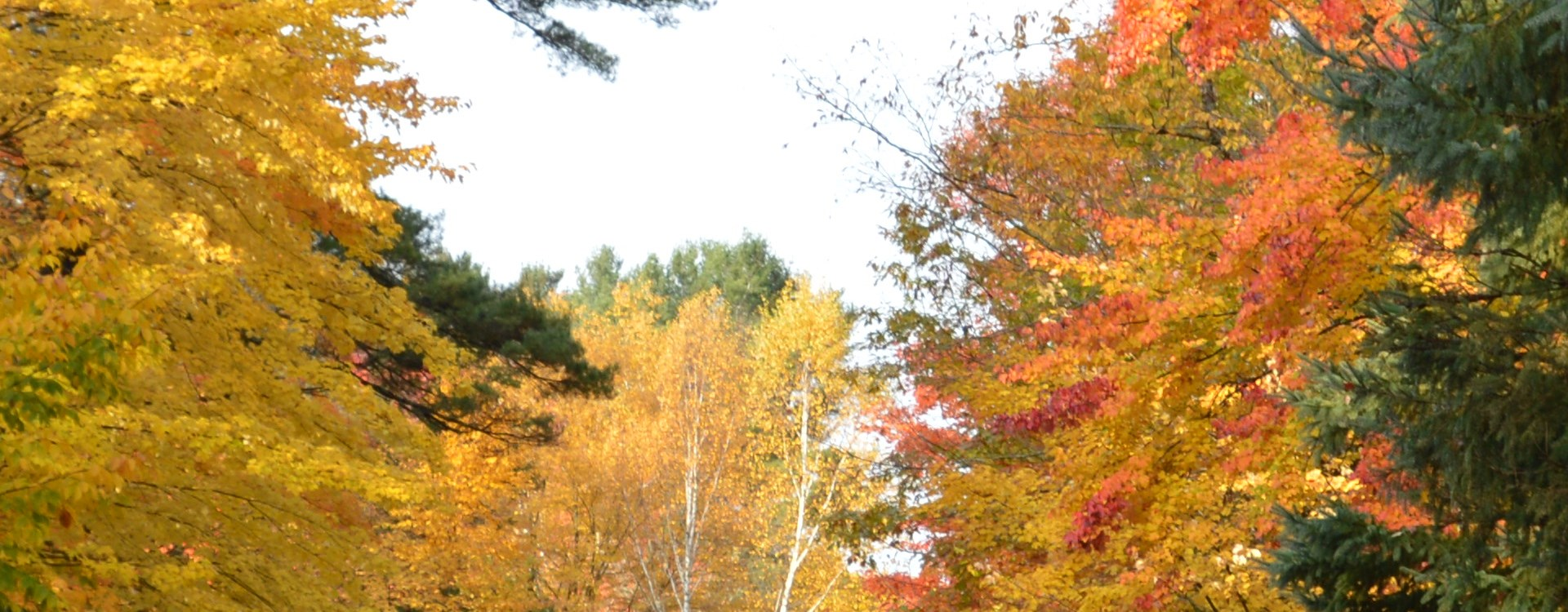 Fall trees with yellow an orange leaves
